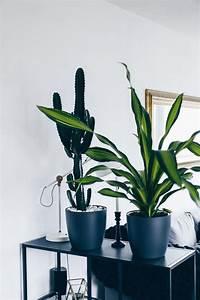 Pflegeleichte Zimmerpflanzen Mit Blüten : 17 best ideas about zimmerpflanzen pflege on pinterest kaktus terrarium terrarium pflanzen ~ Markanthonyermac.com Haus und Dekorationen