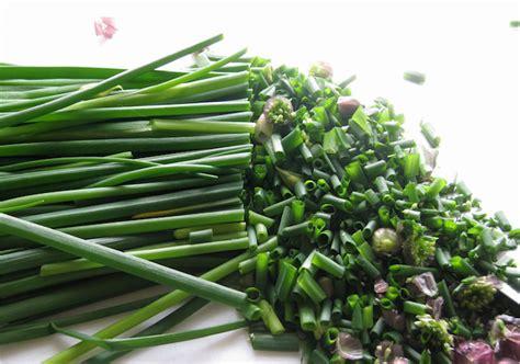 plante aromatique mettez du go 251 t dans votre int 233 rieur archzine fr