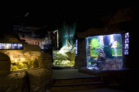 aquarium sea val d europe photo de seine et marne n 176 3977