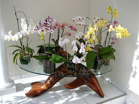 17 meilleures id 233 es 224 propos de rempotage orchid 233 e sur