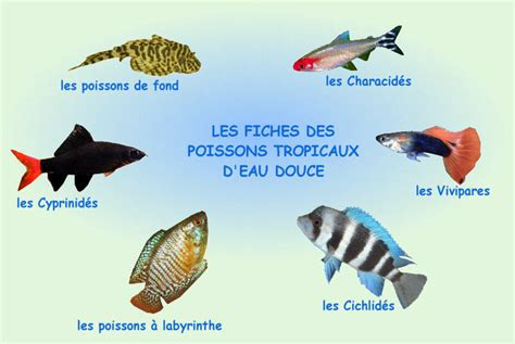 liste poisson aquarium eau douce poisson naturel