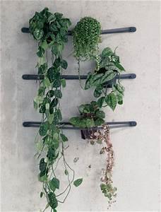 Pflanzen An Der Wand : dekorieren zimmerpflanzen berraschend inszeniert ~ Markanthonyermac.com Haus und Dekorationen
