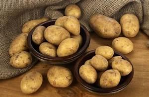Kartoffeln Und Zwiebeln Lagern : kartoffel was nach der ernte behandelt bedeutet ~ Markanthonyermac.com Haus und Dekorationen