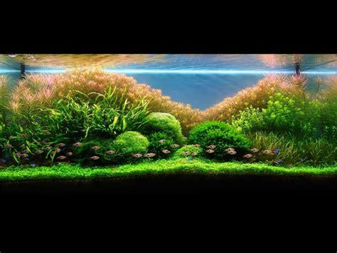 exemple d 233 co aquarium pas cher