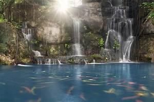 Teich Mit Wasserfall : koi fische im teich mit einem wasserfall stockfoto bild von nebel verm gen 27098316 ~ Markanthonyermac.com Haus und Dekorationen