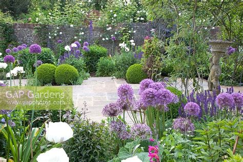Gap Gardens  Purple Themed Cottage Garden With Allium