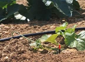 comment arroser le jardin en et 233 diff 233 rentes solutions d arrosages