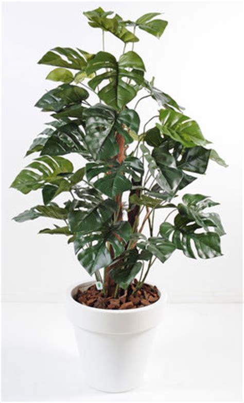 7 plantes vertes pour votre bureau gamm vert