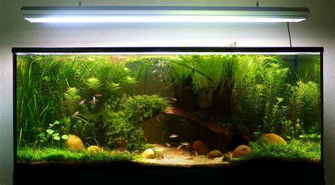 photo crevette aquarium eau douce pas cher