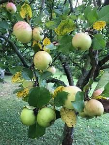 Baum Für Schattigen Vorgarten : ein kardinalfehler ist bereits das h ufig zu knapp bemessene pflanzloch dieses sollte von ~ Markanthonyermac.com Haus und Dekorationen
