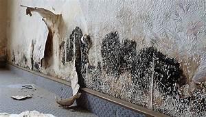 Schimmel An Möbeln : schimmel entfernen dauerhaft beseitigen raum analyse ~ Markanthonyermac.com Haus und Dekorationen