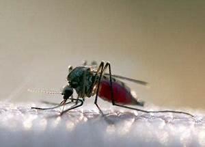 Mücken Im Haus Was Tun : was tun gegen m cken so vertreibt man m cken wirksam ~ Markanthonyermac.com Haus und Dekorationen