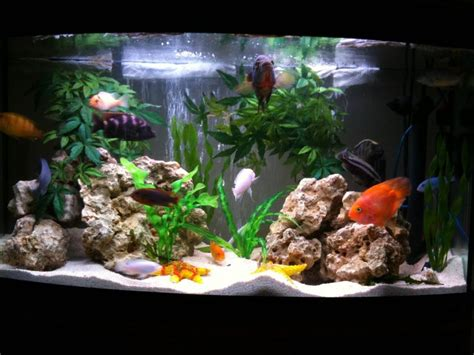 seefu s freshwater tanks photo id 31791 version ratemyfishtank