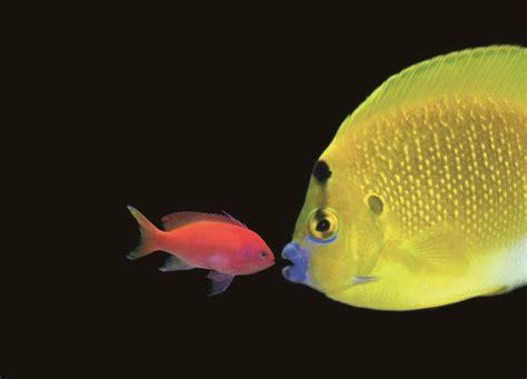 aquarium le 7eme continent tourist attractions talmont hilaire vendee tourism