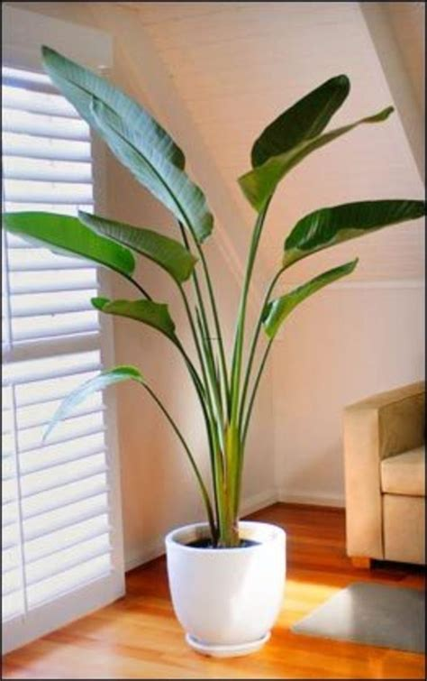 best 25 indoor plant decor ideas on plant
