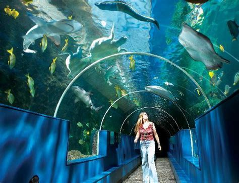 the underwater tunnel picture of oceanarium bournemouth tripadvisor