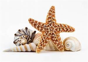 Seashells And A Starfish. Photograph by Dawna Moore ...