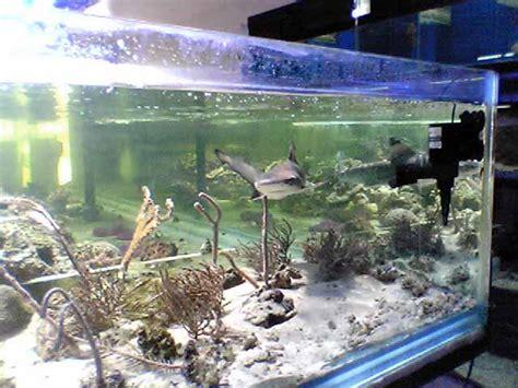 aquarium recifal requin