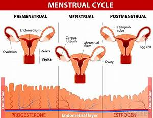 What Is Ovulation? Understanding Ovulation Cycles —Health ...