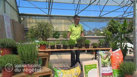 comment et quand planter du thym persil basilic menthe romarin en pot