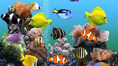 les bases fondamentales de l aquarium animaux