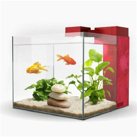poisson aquarium pas cher 28 images cliquez et trouvez aqua nano kidz 30 bleu de zolux pas