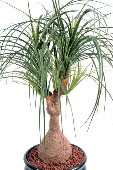plante artificielle beaucarnea pied d 233 l 233 phant int 233 rieur h 75cm