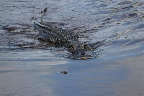 Airboat West Palm Beach by West Palm Beach Airboat Rides All You Need To Know