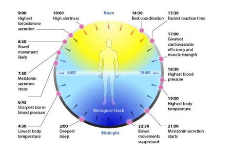 Sleep Wake Cycle by What Is Your Circadian Rhythm