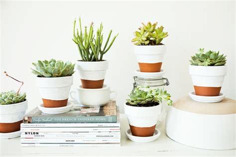 plantes succulentes 75 id 233 es de compositions florales
