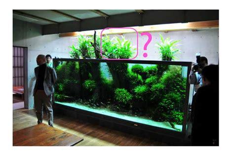 mur v 233 g 233 tal avec aquarium de 320l gt paludarium page 3
