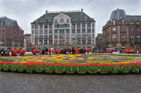 Amsterdam Museum Free Days by National Tulip Day In Amsterdam Is A Free Tulip Picking Event