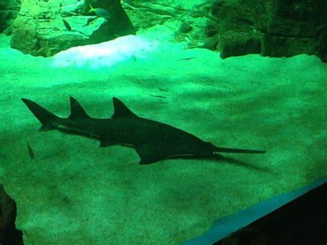 l aquarium une sortie pour les petits maman