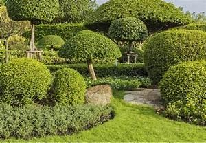 Pflanzen Japanischer Garten Anlegen : japanischen garten anlegen pflegen und gestalten mit obi ~ Markanthonyermac.com Haus und Dekorationen