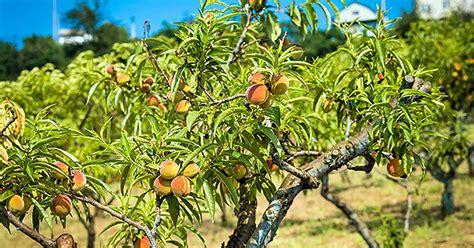 East Texas Fruit Tree Nursery