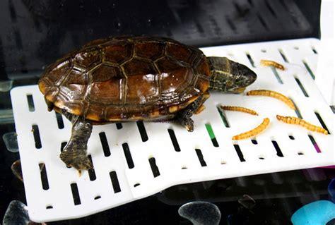 23cm transparent acrylic terrace reptiles turtle terrarium