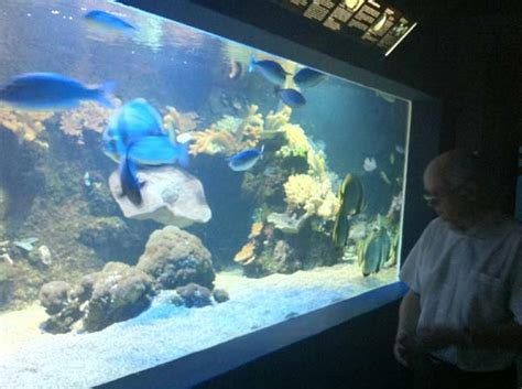 les coulisses de l aquarium du cap d agde aquarium r 233 cifal aquarium marin aquarium eau de
