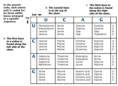 Codon Chart Worksheet
