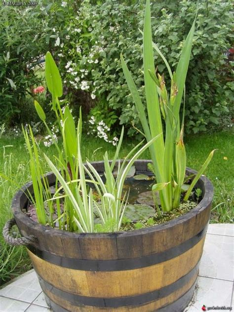 mon mini bassin aquatique mon bassin aquatique les galeries photo de plantes de gardenbreizh