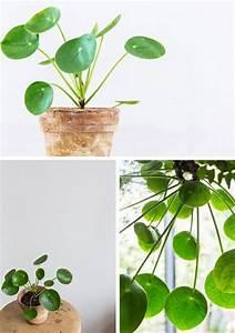 Große Zimmerpflanzen Pflegeleicht : die 25 besten ideen zu zimmerpflanzen auf pinterest schlechten lichtanlagen und innenanlagen ~ Markanthonyermac.com Haus und Dekorationen