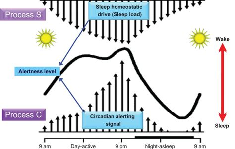 Sleep Wake Cycle by Two Processes Govern The Daily Expression Of The Sleep