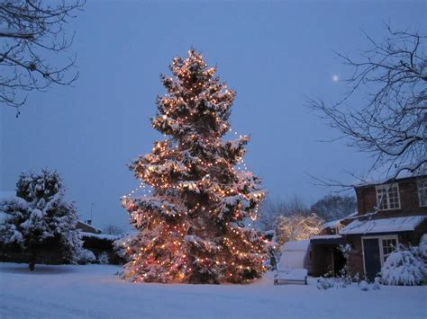 Couple Plant Christmas Tree In Outside Their Home