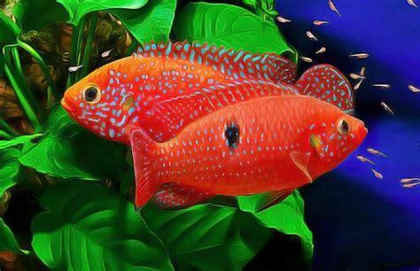 les 25 meilleures id 233 es concernant aquarium pour poisson sur poisson