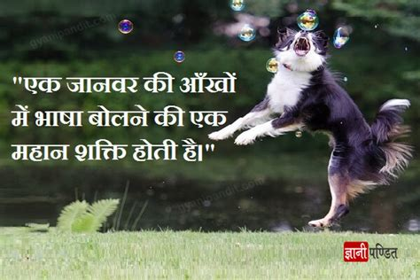 Quotes About Animals And Nature In Hindi  Best Quote