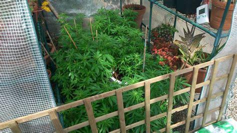 culture de cannabis en ext 233 rieur hors saison du growshop alchimia