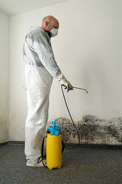 Vancouver Mold Removal  Mold Remediation PPD
