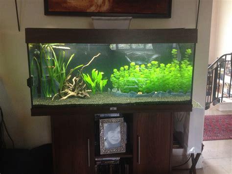 d 233 marrage aquarium juwel 180 quelle quantit 233 de substrat mettre