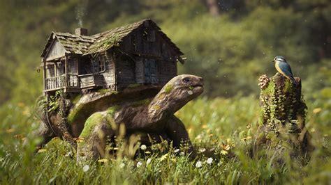 Fotos Schildkröten Fantasy Gras Haus
