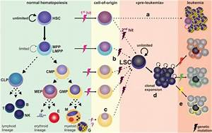 The leukemic stem cell model. In normal hematopoiesis ...
