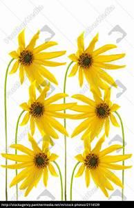 Gelbe Fensterrahmen Wieder Weiss : gelbe blumen lizenzfreies bild 2114539 bildagentur panthermedia ~ Markanthonyermac.com Haus und Dekorationen